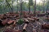 Deforestation Meaning