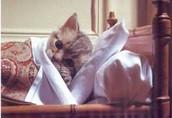 Gedrag van de zieke kat