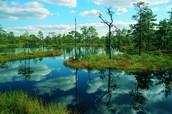 Ein Sumpf