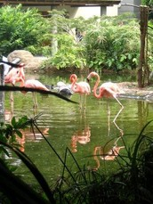 Cali zoo (el zoologico