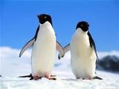 Penguin (pen Gwyn)