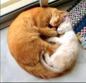 Yin and Yang!