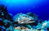 Great Barrier Reef (18.2861 S, 147.7 E)