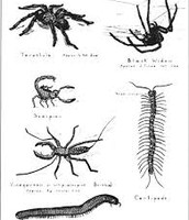 Poisonous  Insects