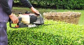 The Benefits Of Tree Trimming On Your Property