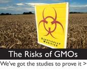 Risks of GMOs