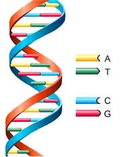 TRACES OF DNA