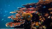 /Great Barrier Reef\