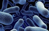 What is bacteria and how does it spread?