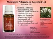Melaleuca Alterifolia (tea tree) oil