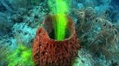 Barrel Spong