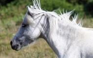 Cute ponies!!!