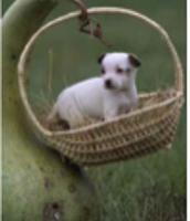 BBFF's (best basket friend forever)