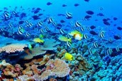 The dying Great Barrier Reef