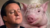 David Cameron likes pigs, maybe too much.