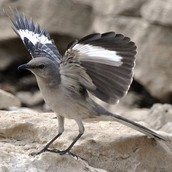 The State Bird