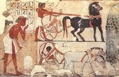 Sports that just Egyptians played