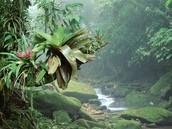 Congo Rainforests