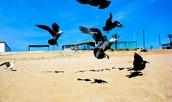 Pájaros levantando el vuelo.