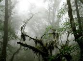 Subtropical Cloud Forest