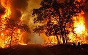 Wildfires can destroy land very quickly.
