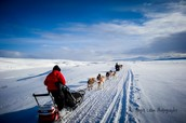 Musher Training:
