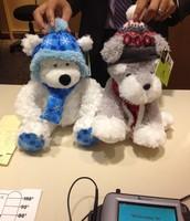 Bears for Sponsorship