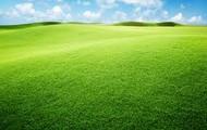 other kind of grassland