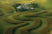 Origin of Strip Farming