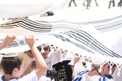 Opening the Torah scrol near the Western Wall.