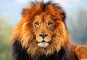 I am lion grass cutting services!