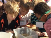 Students examine the pond critters.