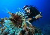 The Job of a Marine Biologist