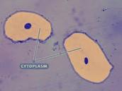 Microscopic Visual