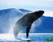 Why whales are important?