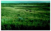 What are some Characteristics of grasslands?