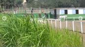 Aprende a relacionarte con los caballos en Hipica Canaria