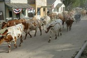 Dodge City Cattle Drive