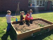 Preschool Gardeners in Action