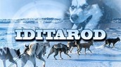 Iditarod Artwork