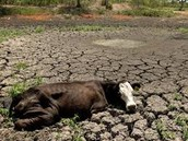 Wildlife that is most affected by Drought and how