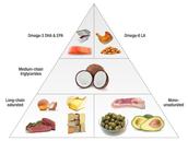 Fats Pyramid