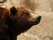 Un oso de Zoo