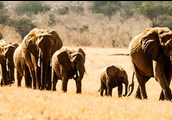 This is an image of the elephants on the journey.