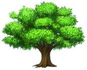 TREE HUNT!