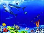 """""""Знакомство с подводным царством и его обитателями"""""""