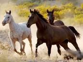 הסוסים בחולות