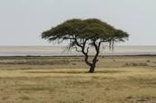 dry savanna