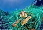 tangled sea turtle