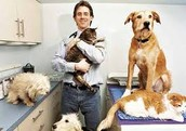 Provides medical services in support of the health of animals. Requires a DVM & 5 years of experience in the field.